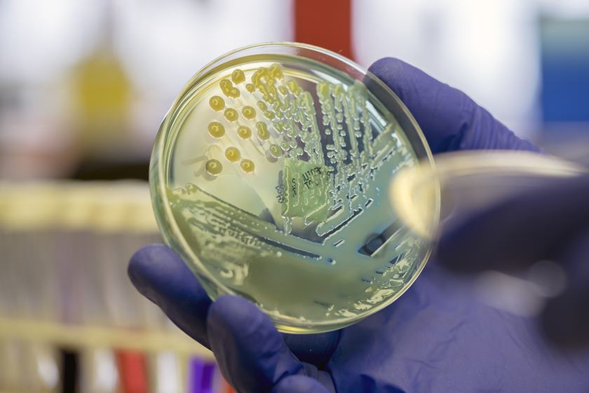 bacterie 2019)
