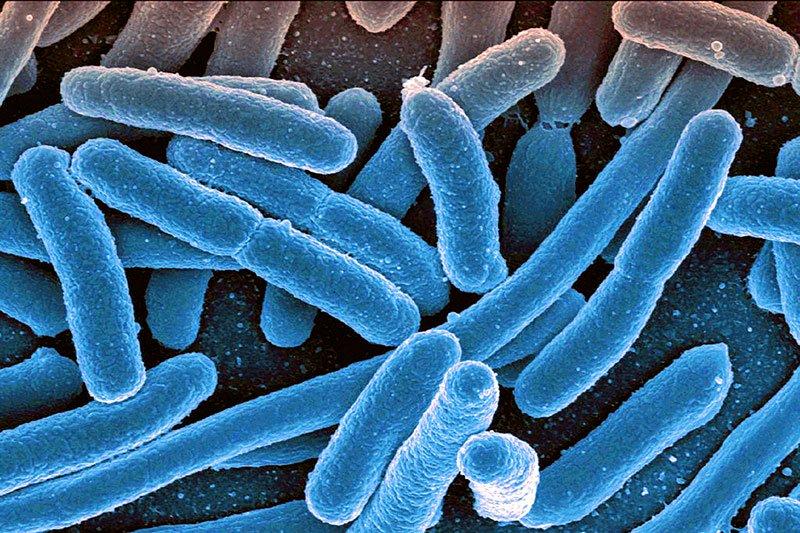 bacterie x)