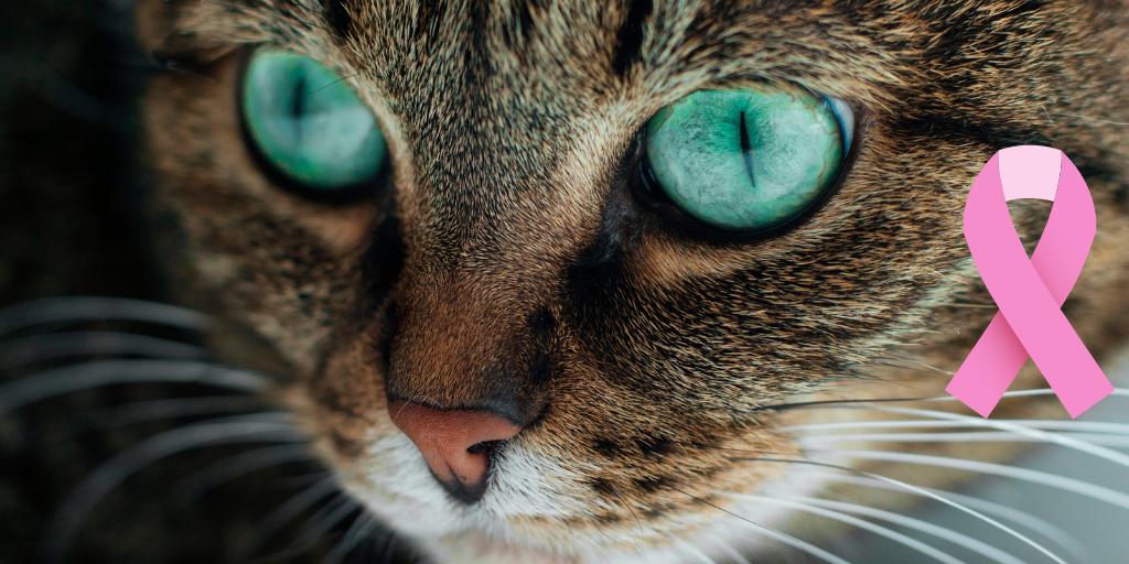 papiloma virus gato)