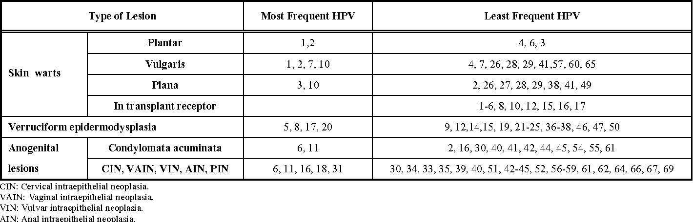 papillomavirus hpv oncogene)