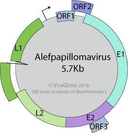 papillomaviridae viralzone