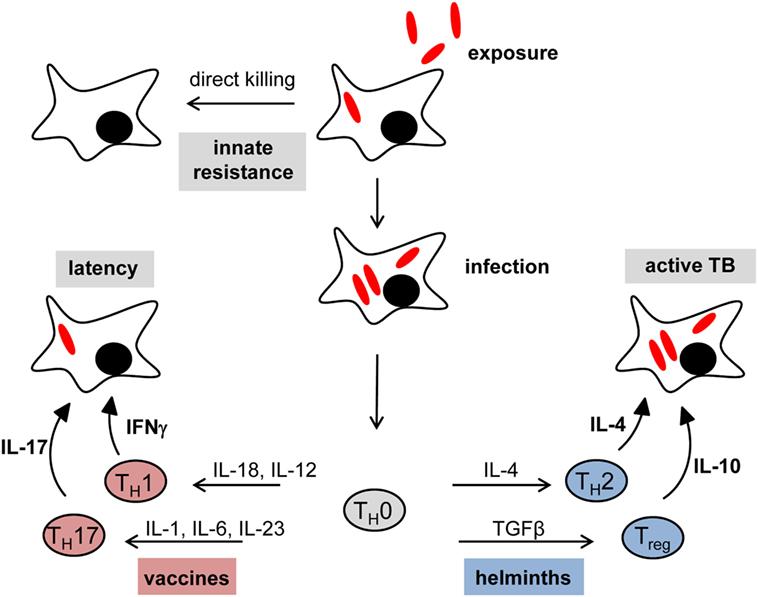 helminth diseases)