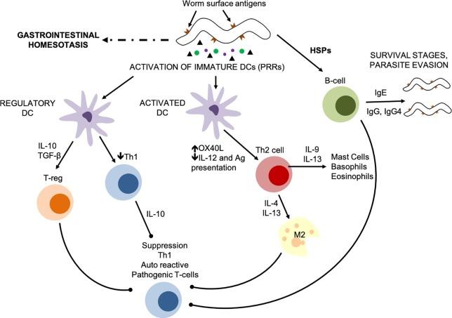 blastocystis hominis parazit hpv gola esami