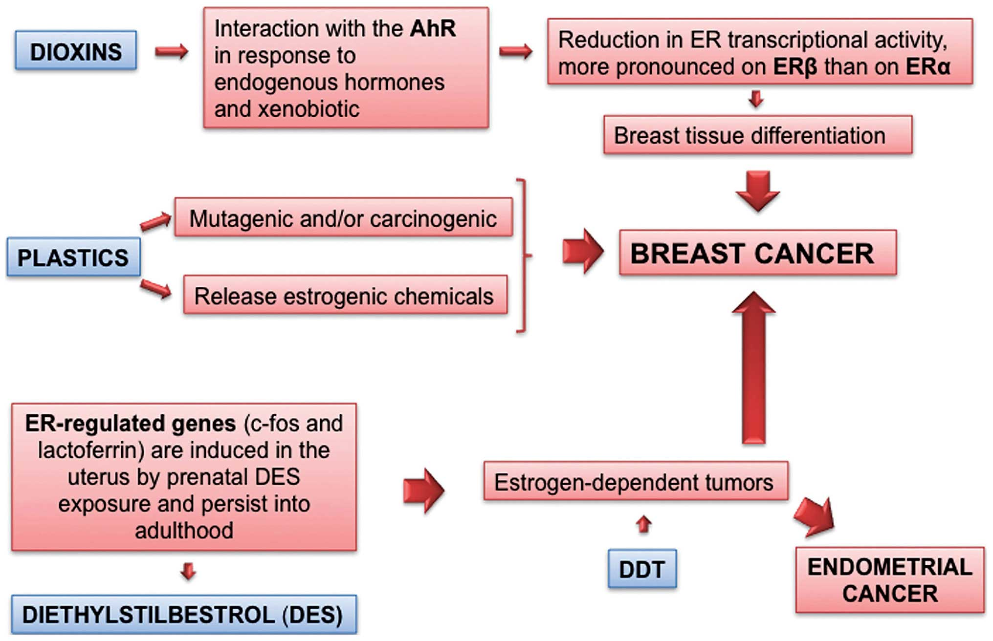 endocrine cancer of the ovary)