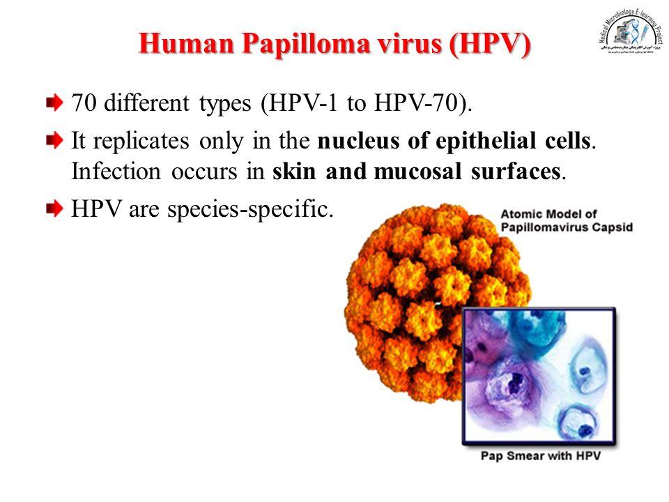 hpv is a dna virus papillomatosis symptoms