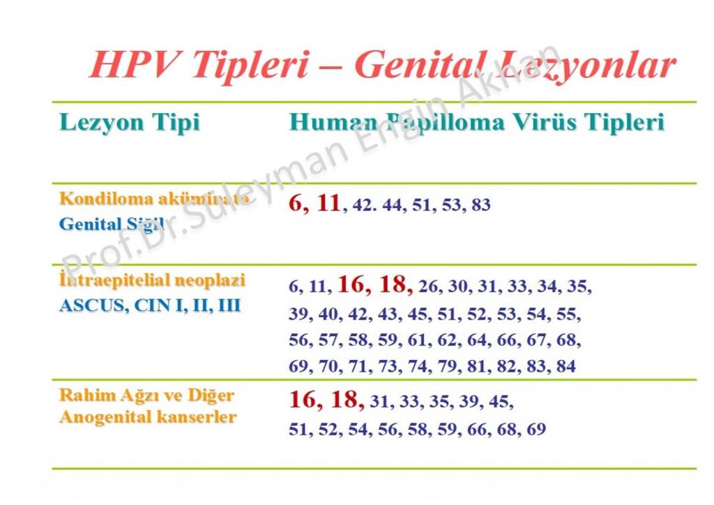 hpv types genital warts)