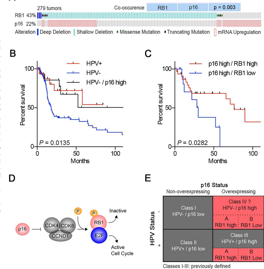 cancer osos manifestare human papillomavirus infection in throat