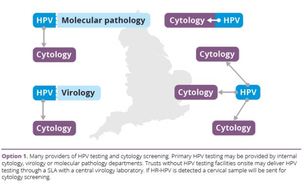 human papillomavirus testing in primary screening)