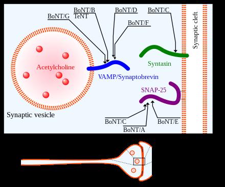toxine | asspub.ro