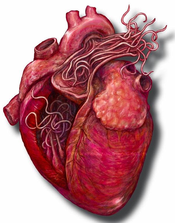 paraziti la inima la om)