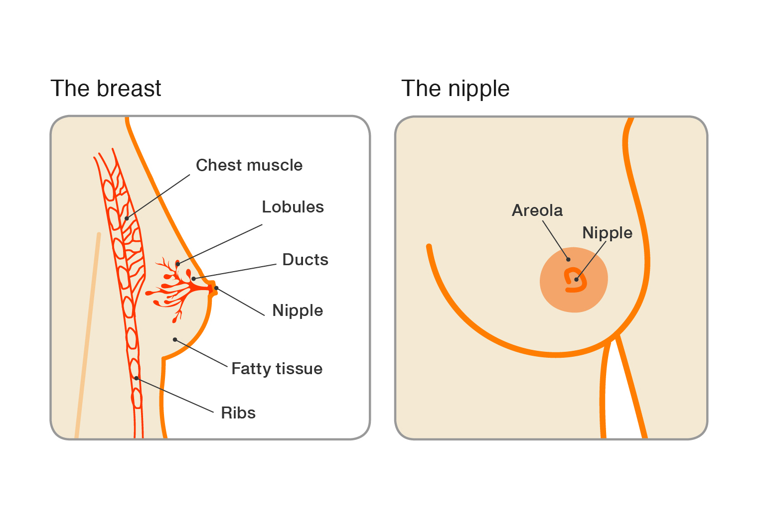 breast papilloma during pregnancy