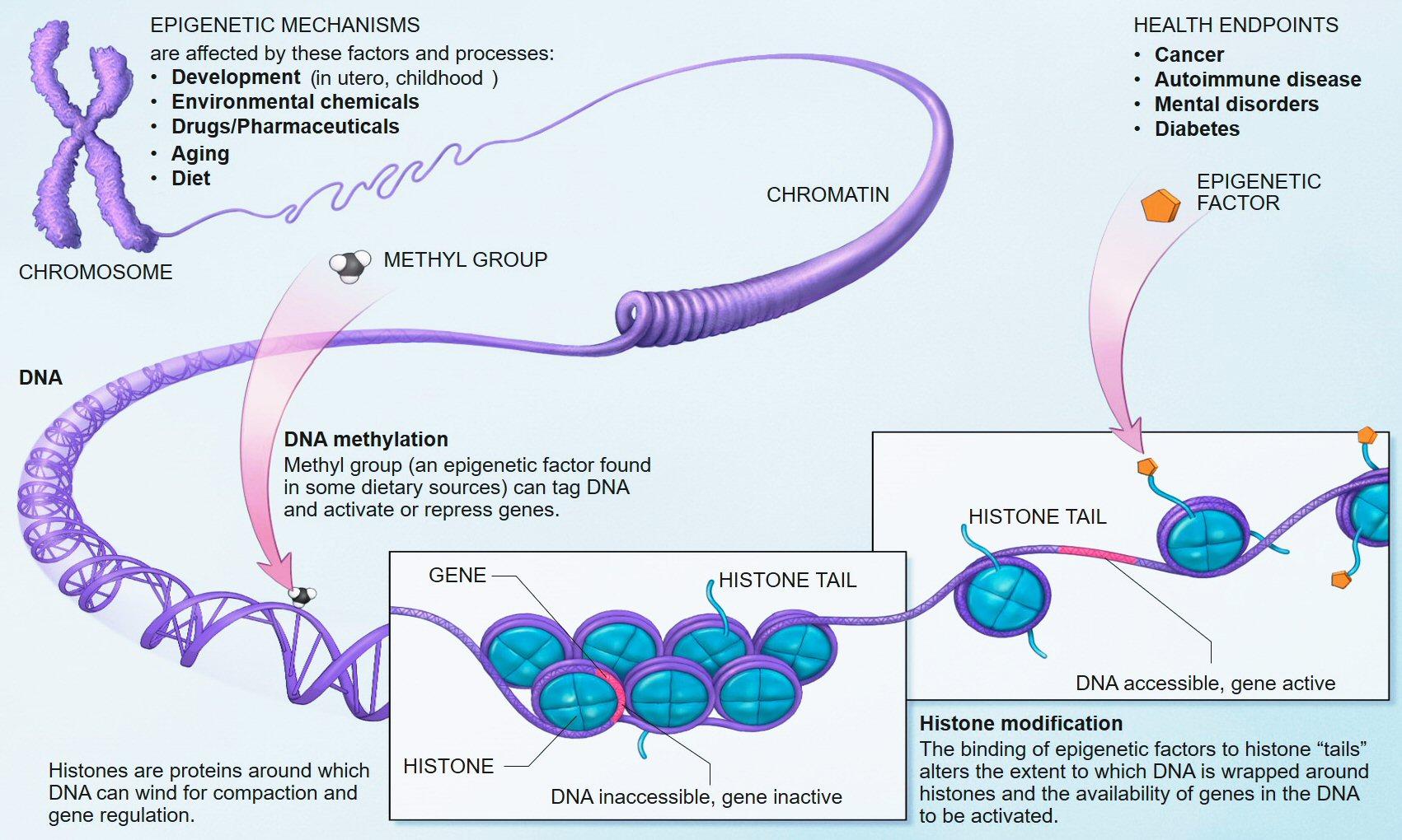Este cancerul o boală ereditară?