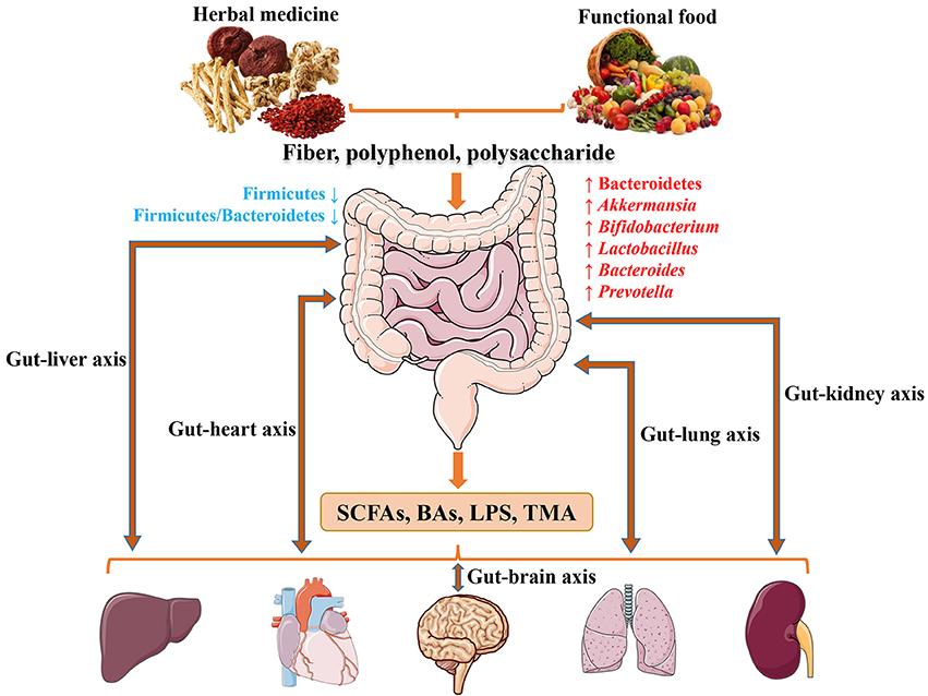dysbiosis herbal treatment ovarian cancer ibs