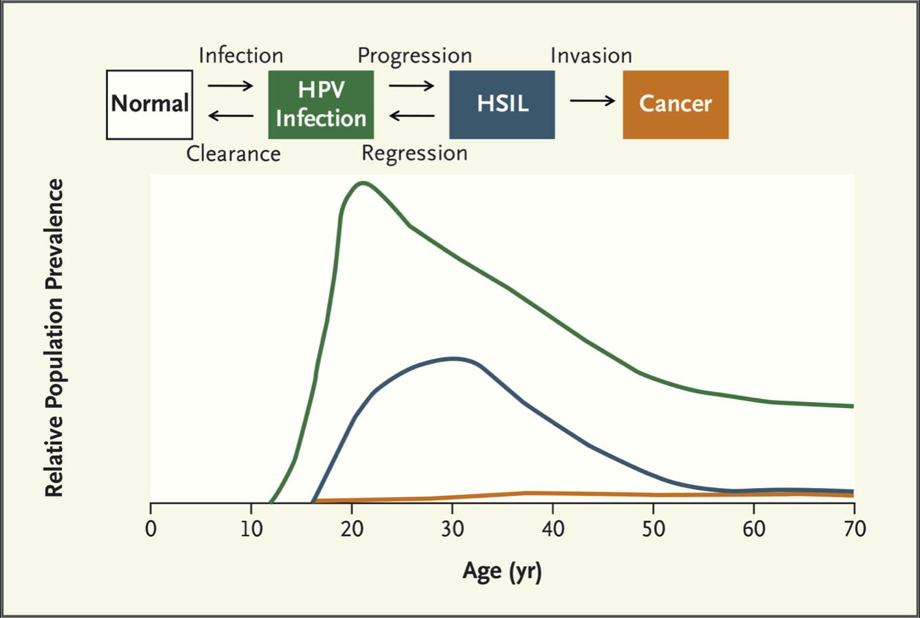 human papillomavirus infection level