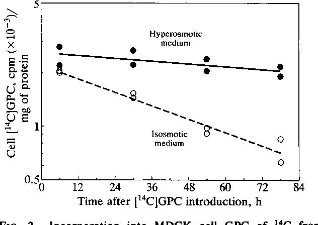 papilloma e utero hpv virus cin 2