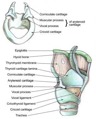 laryngeal papilloma emedicine)