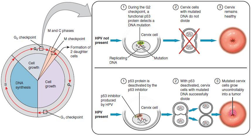 hpv virus cervix treatment