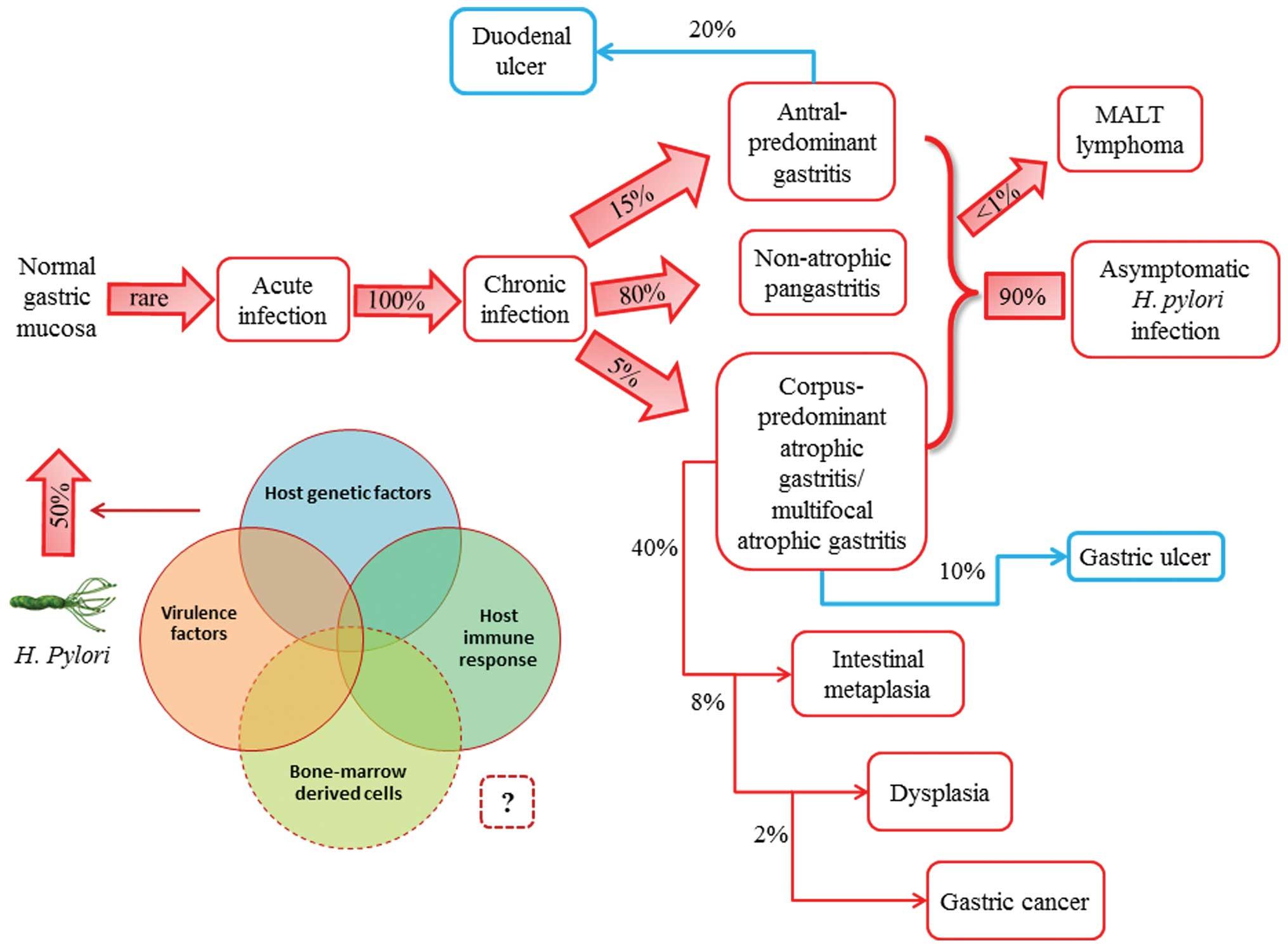 gastric cancer pathophysiology)