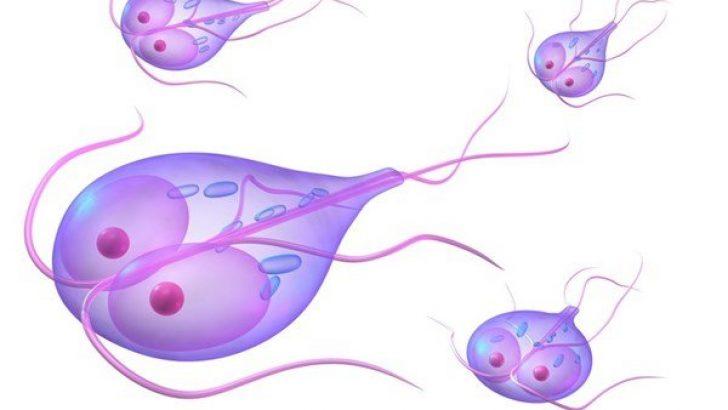 lamblia parazit tedavisi