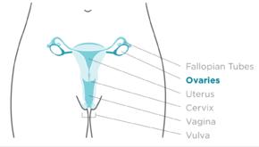 Proceduri ginecologice laparoscopice în timpul sarcinii
