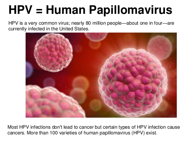 human papilloma viruses associated with