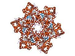 virus papiloma virus humano