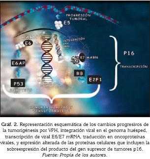 trasmissione papilloma virus verruche tratament paraziti intestinali pasari