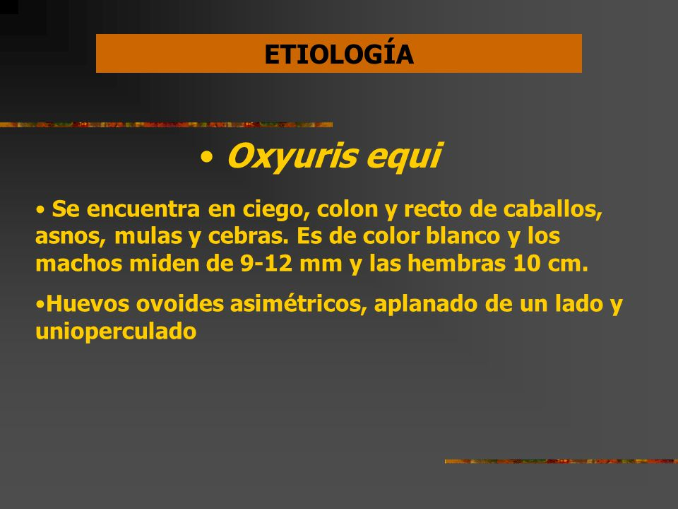 oxyuris equi zoonotic