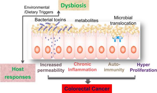 cancer treatment intestinal bacteria