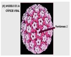 virus del papiloma bajo riesgo)