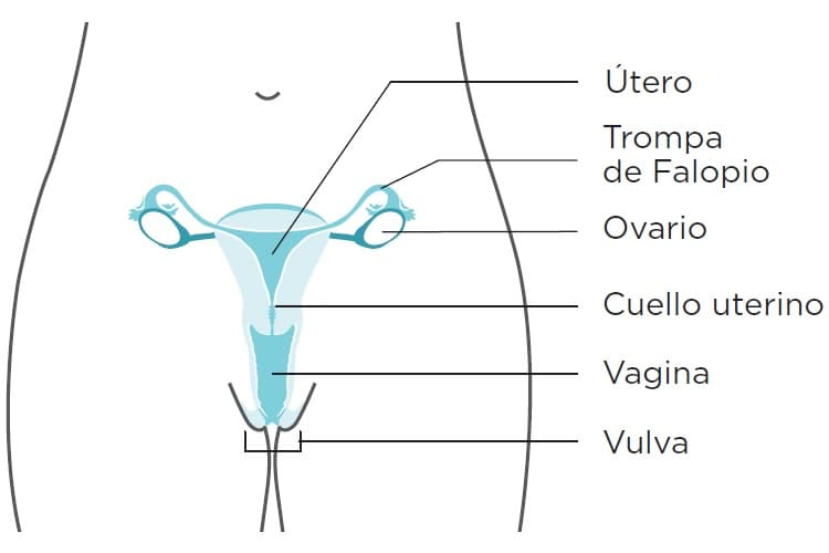 papiloma humano cancer cervico uterino sintomas)