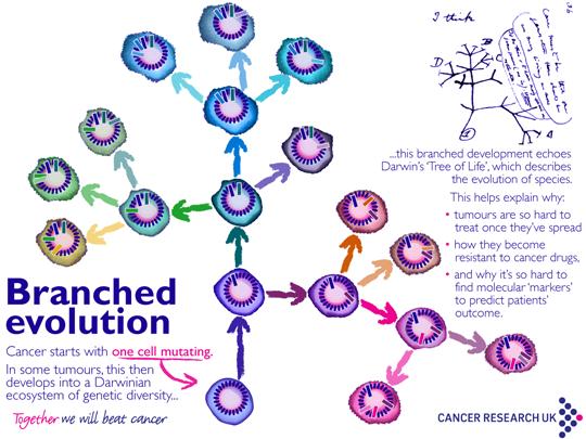 myCancerRiskDNA - evaluare risc cancer ereditar, profil genetic extins   Synevo
