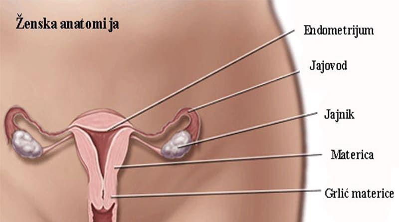 hpv virus rak grlica maternice