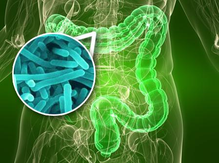 bacterii flora intestinala)