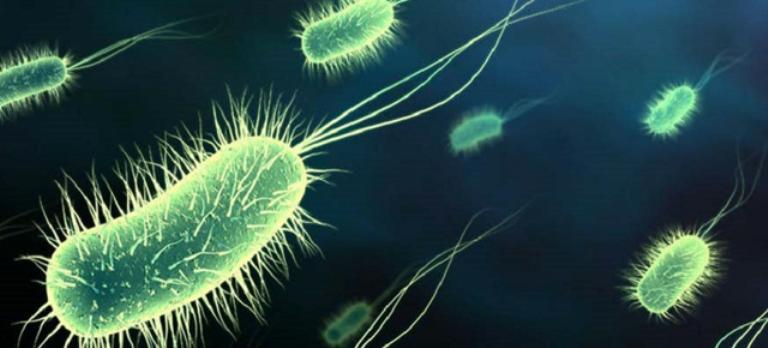 bacterii rele exemple