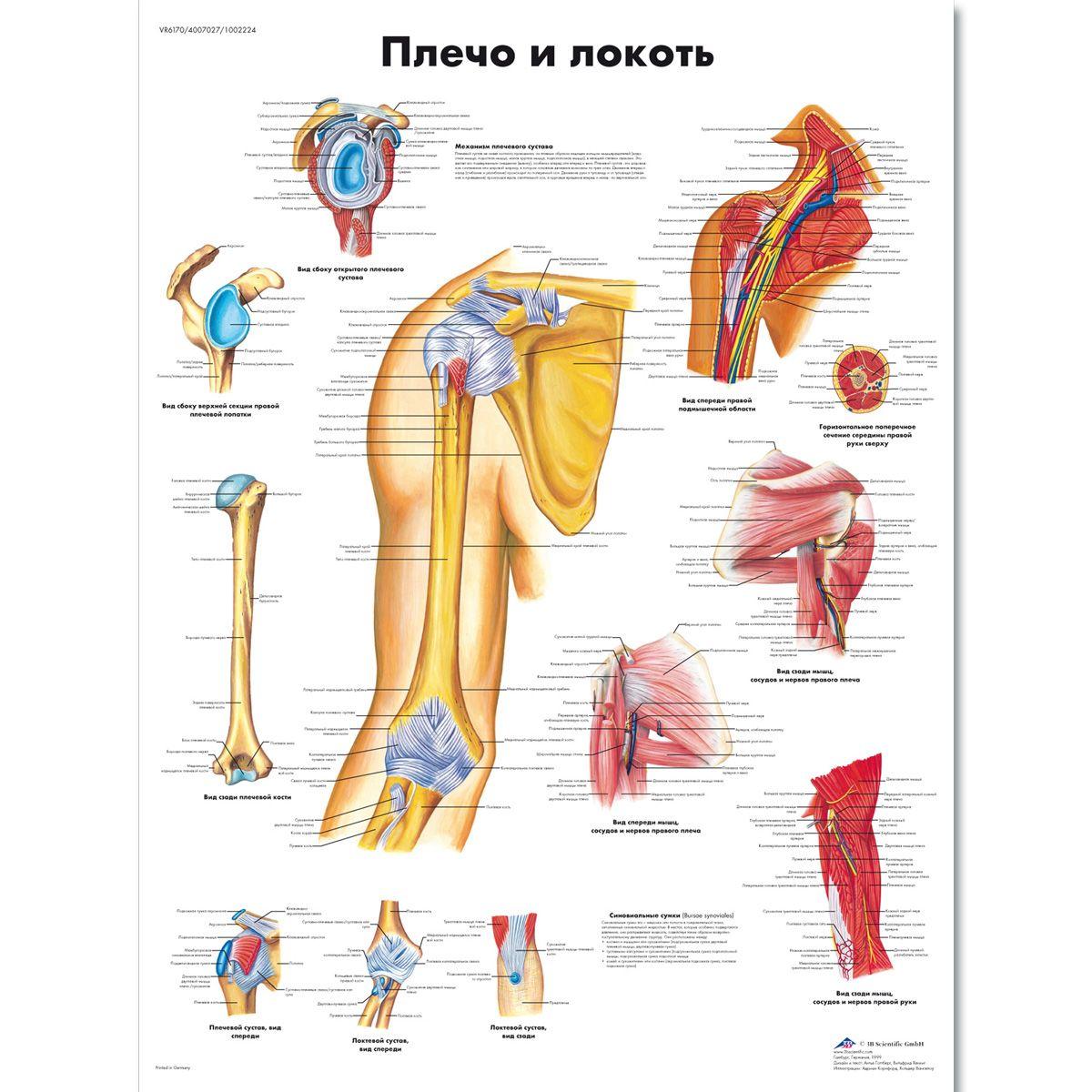 cancerul apendicular)