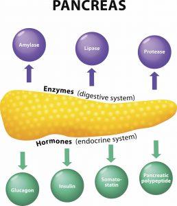 pancreatic cancer endocrine