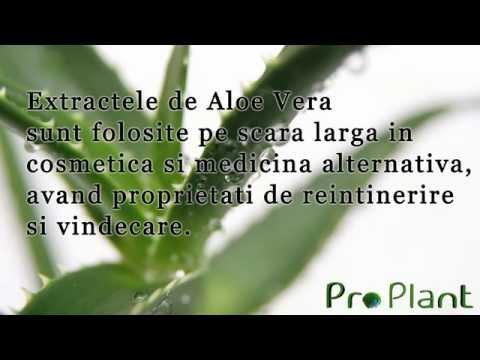 Aloe vera și ajutorul său de preț în lupta cu kilogramele - Antena Satelor