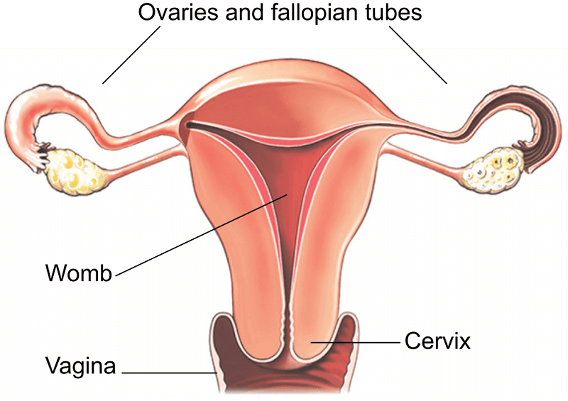 uterine cancer hysterectomy recovery time www virus del papiloma com