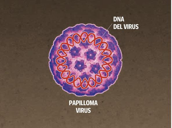 che cose il papilloma virus)