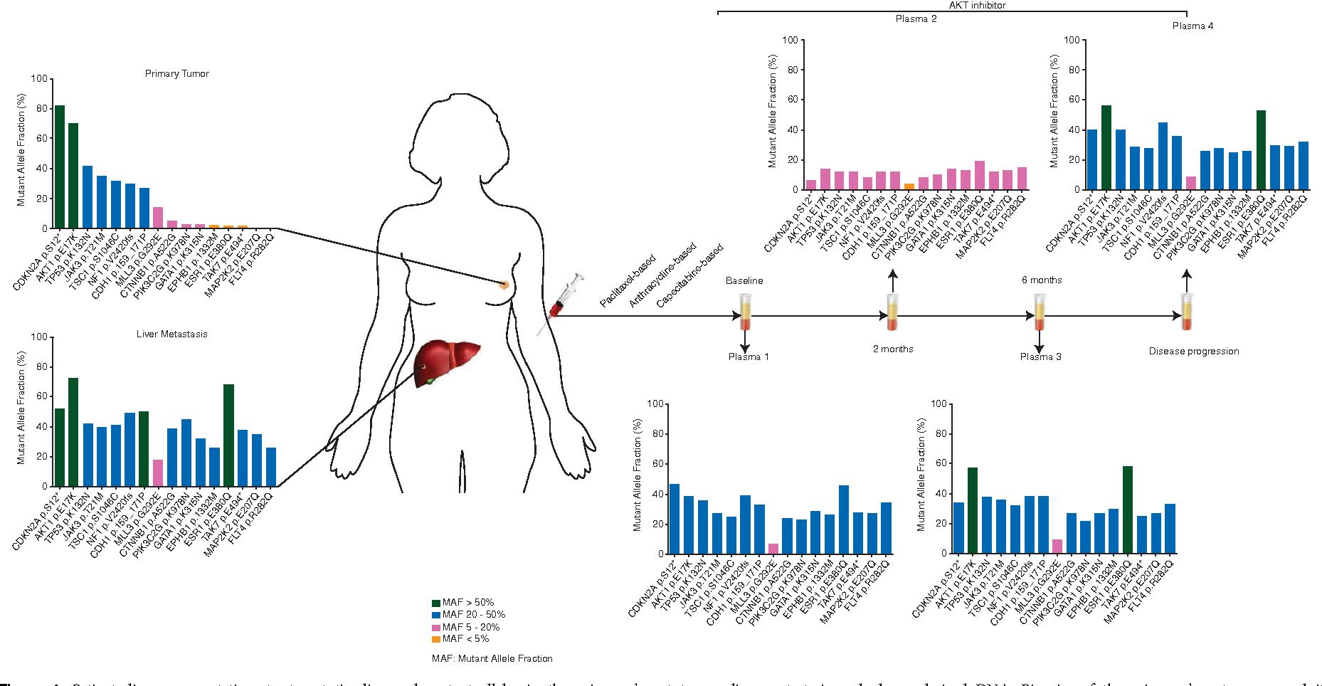 breast cancer genetic heterogeneity cancer genetic disease highlights