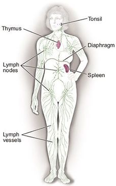 cancer hodgkin human lymph lymphoma nodes non icon)