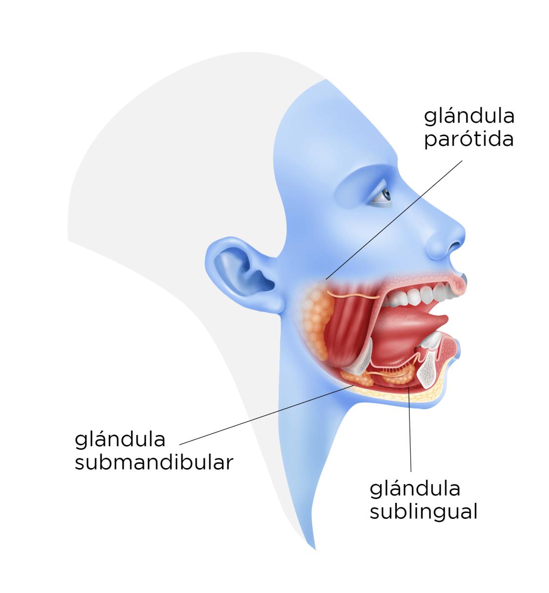Cancer maxilo-facial