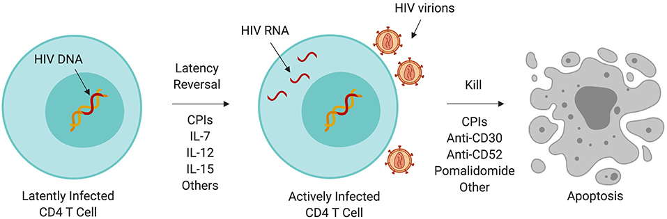 hiv and penile cancer