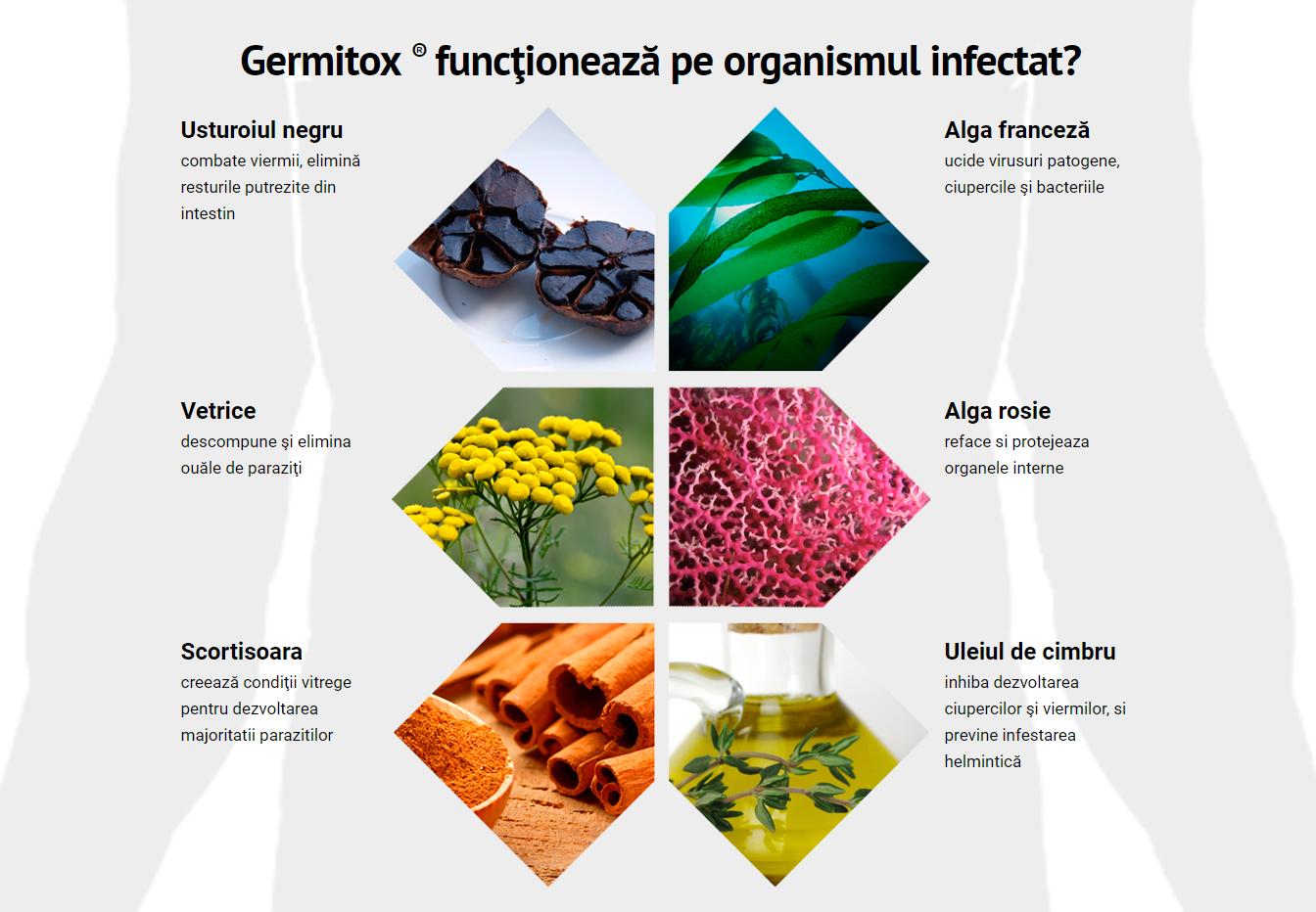 cum de a proteja împotriva paraziților intestinali hpv virus zonder wratten