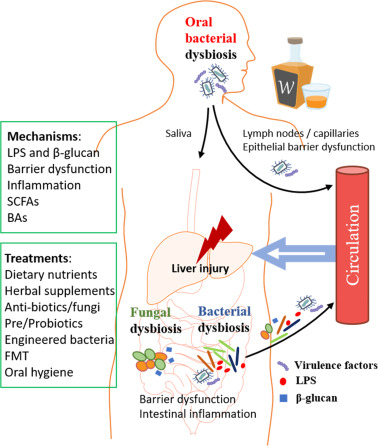 dysbiosis herbal treatment
