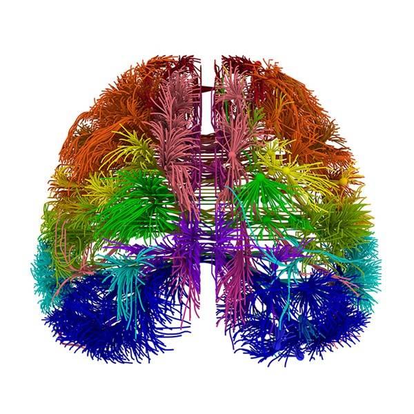 cancer cerebral biodescodificacion)
