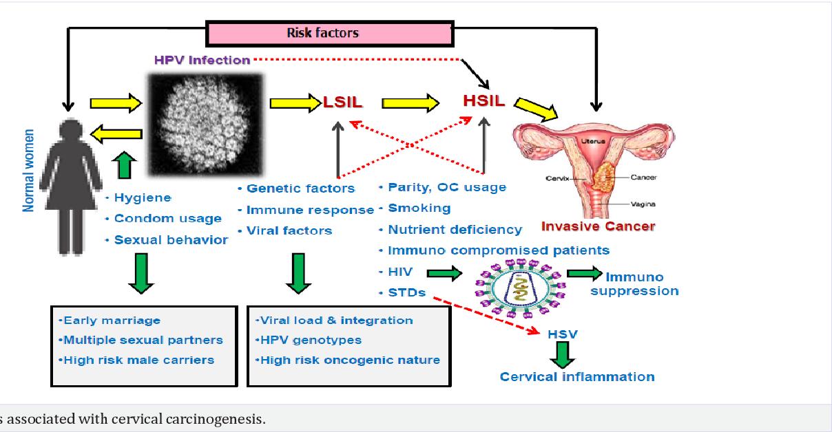 hpv cervical cancer risk factors)