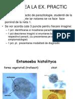 protozoar flagelat
