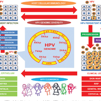 human papillomavirus in neonates)